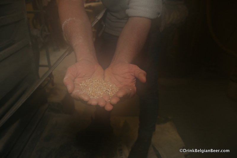 Some grains from the malt crusher.