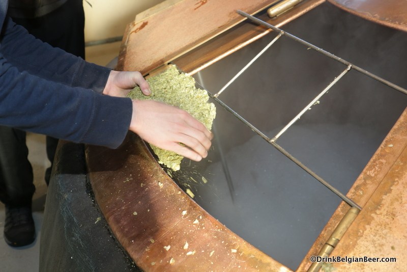 Close up of aged whole hops being added to the left side Cantillon boiling kettle