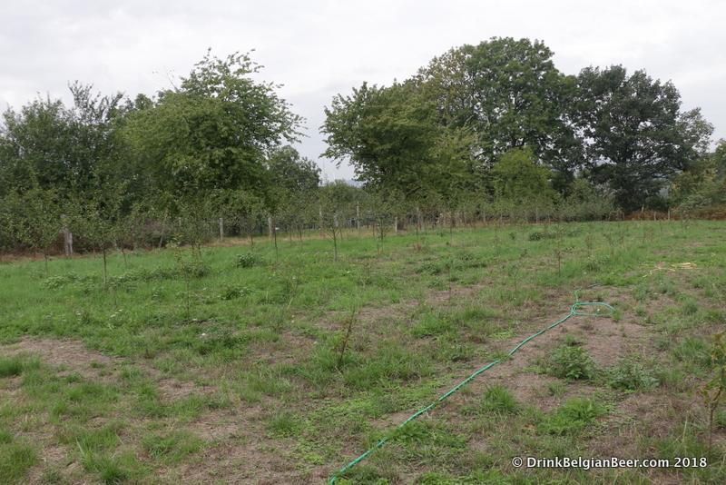 More Schaarbeekse cherry trees behind the Oud Beersel site.